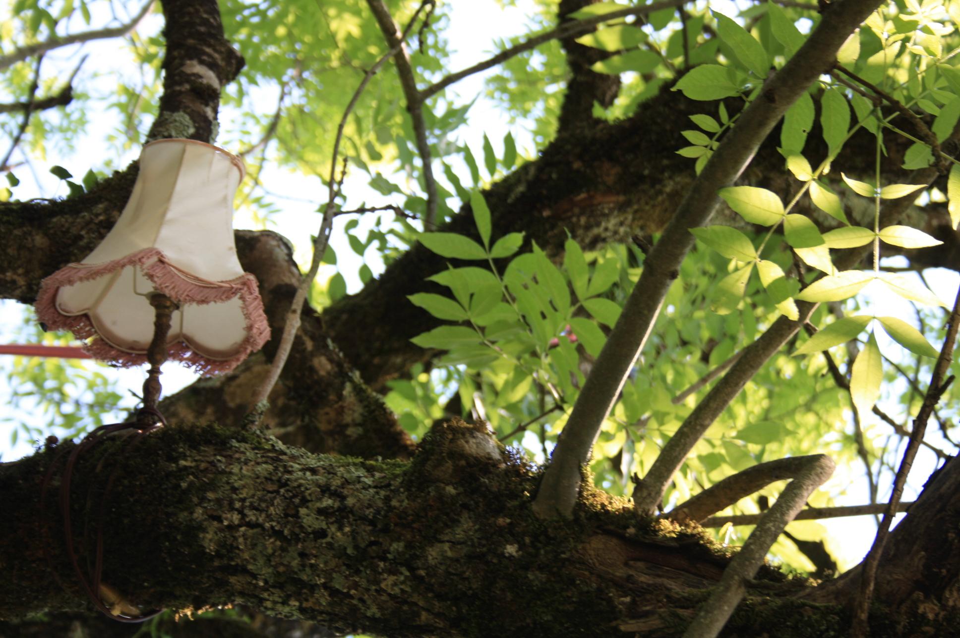 Quirieu dans les bois